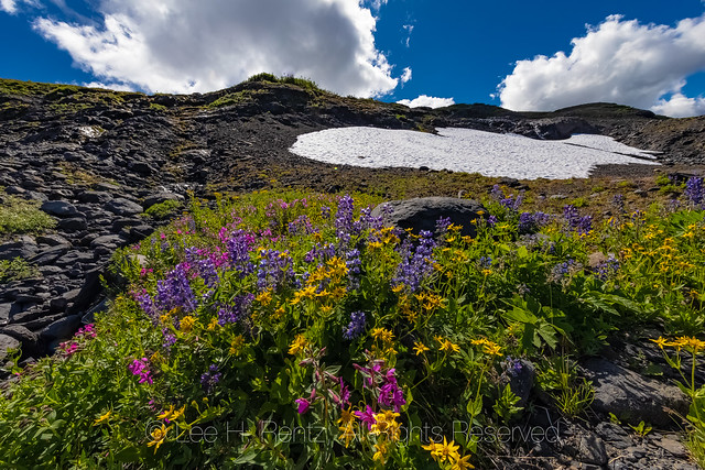 Alpine Wildflower Meadow on Heliotrope Ridge