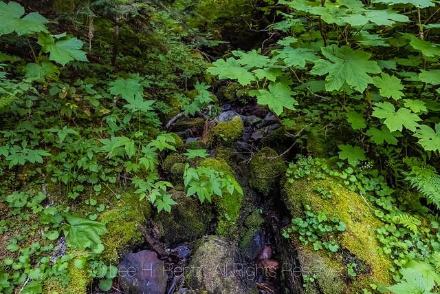 Devil's Clud along Heliotrope Ridge Trail