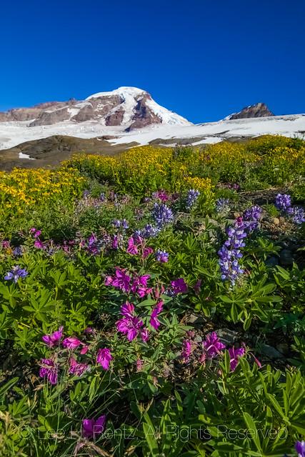 Wildflower Meadow on Heliotrope Ridge