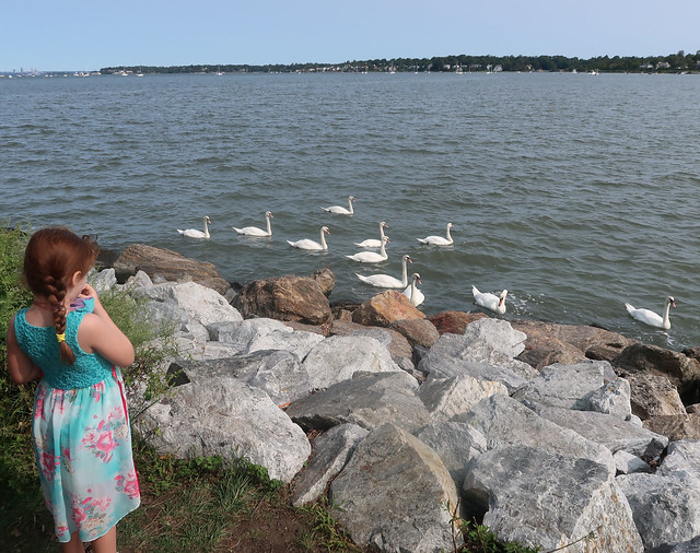 A Lamentation of Swans in Little Neck Bay