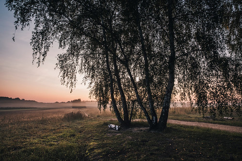 mazovia poland meadow trees flora mist fog morning sunrise summer landscape nature outdoors