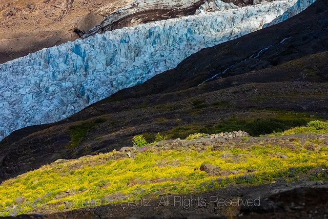 Coleman Glacier Flowing Down from Mount Baker