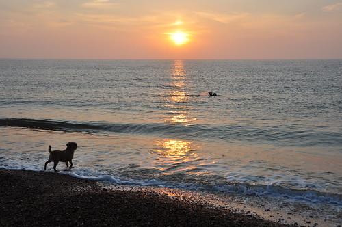 suffolk sunrise swimmer dog beach beachphotography glitterpath water pakefield pakefieldbeach
