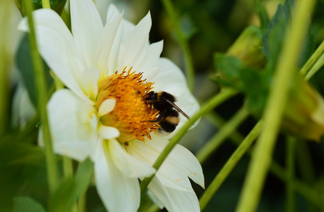 Munich - Bumblebee