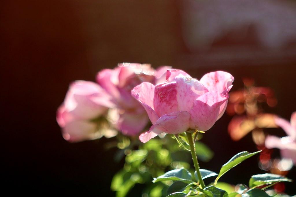 Princess de Monaco      Rodenstock Splendar   1 : 2,8  f=85mm
