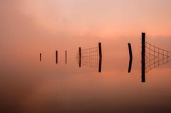 Fencelined  (由  ajecaldwell11
