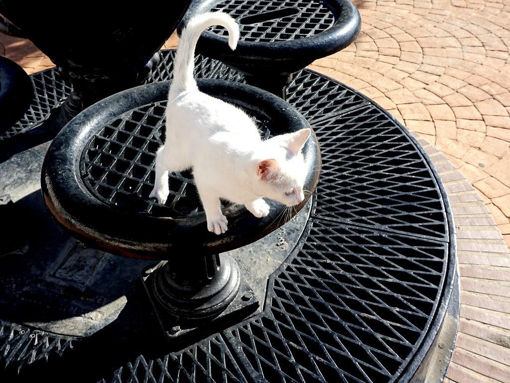 Un lindo gatito!!!