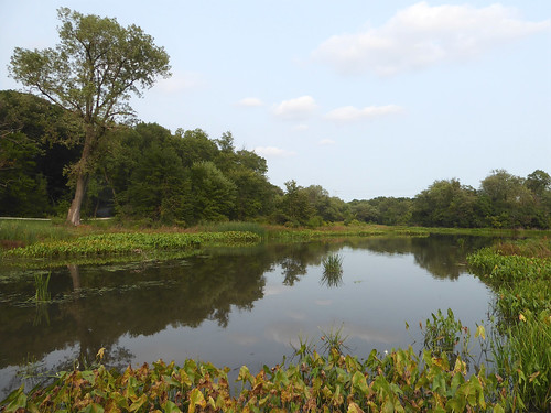 glenellynil churchillwoods forestpreserve park nature flora plants green leaves foliage woods trees water river