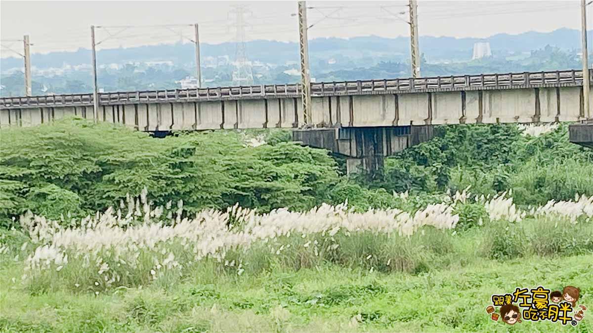 大樹舊鐵橋芒草-6