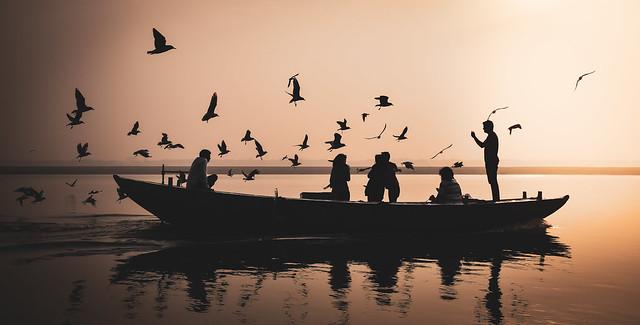 The birds (Varanasi, India)