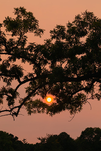 sunset sun smokey haze tree vertical nature silhouette wisconsin midwest nopeople outdoors outside canoneos5dmarkiv canonef100400mmf4556lisiiusm background wallpaper