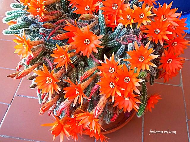 Flores de Algete 20191223-WA0018