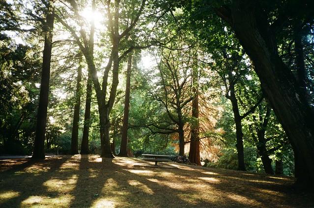 Laurelhurst Park, 29 Aug 2020