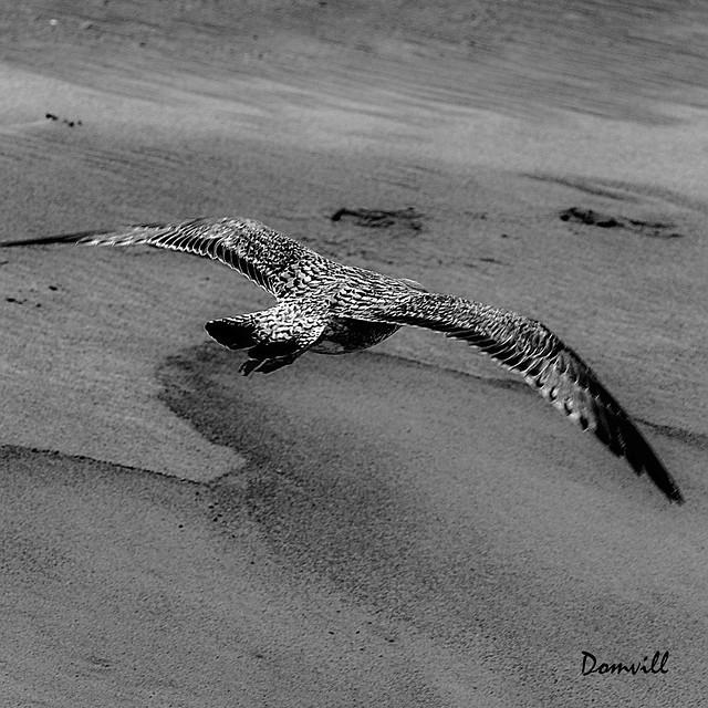 Vol au raz du sable