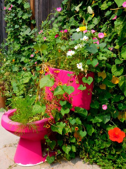 Magenta Toilet Planter