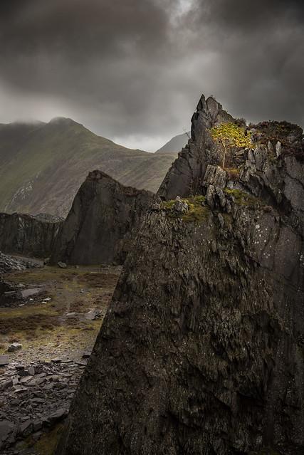 The Mountain Ash
