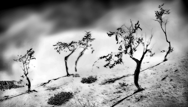 A Scolding of Trees...In the Desert