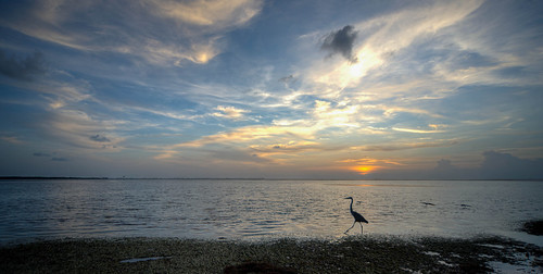 sunset florida beach ocean gulf palmetto emersonpoint palmettoflorida greatblueheron bird nature wildlife animal landscape