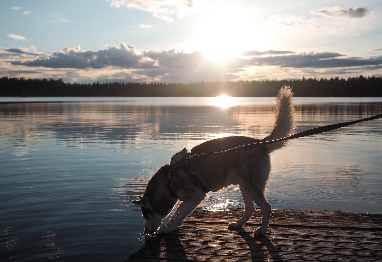 jalasjärvi pitkä laituri