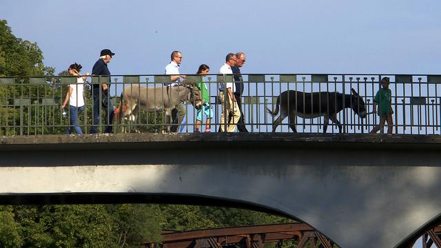 The Daily Donkey Walk