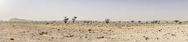 Wide wide Country - Oman 136
