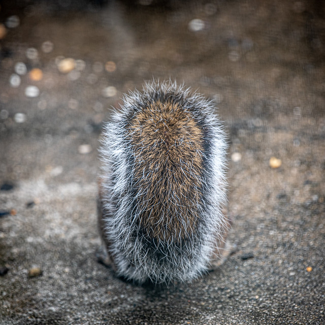 a fluffy tail with bird food bokeh ❤︎