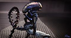 Alien xenomorph Avatar