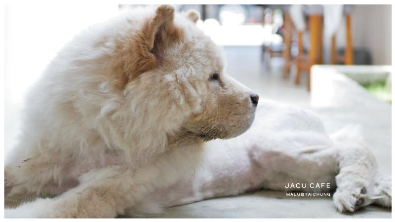JACUCAFE-4