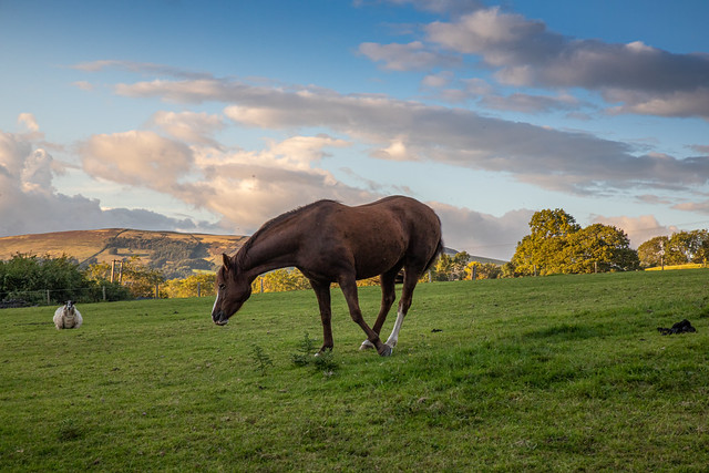 horse outside our cottage in the hope valley