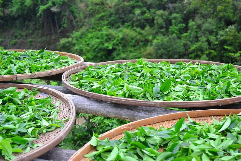 tea introduction course