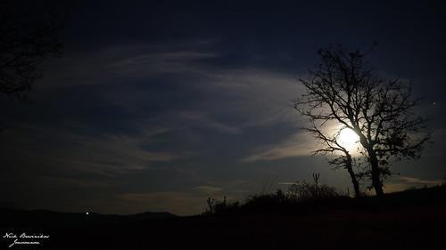 nature sony sonyalpha sonya6000 sigma sigma3014 night tree moon