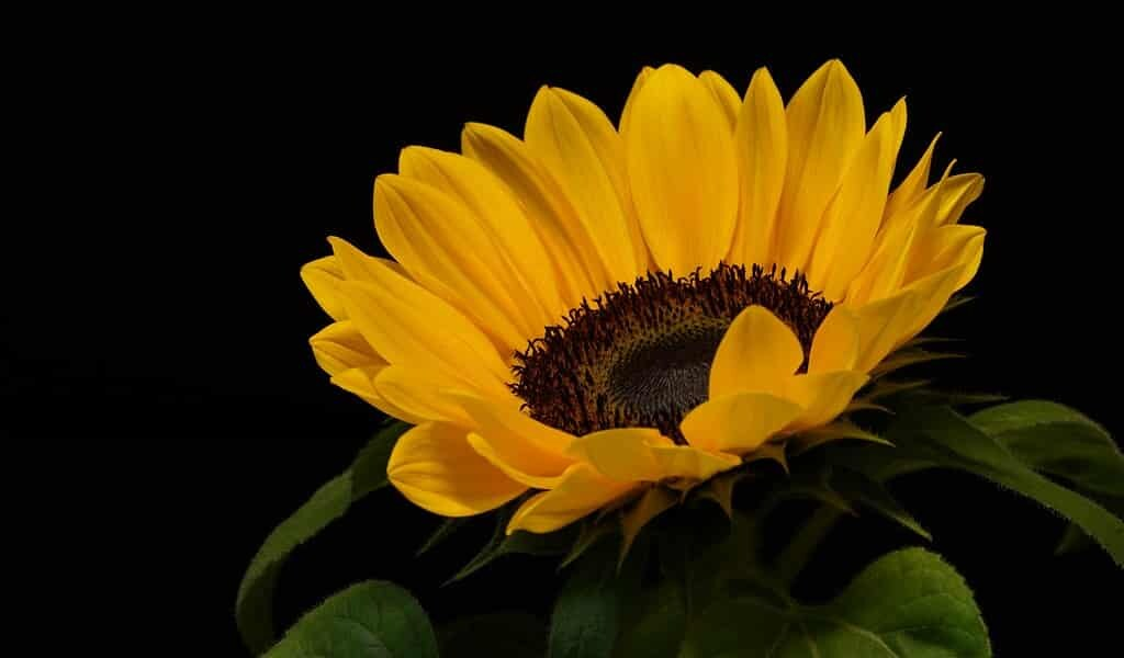 les-abeilles-peuvent-augmenter-la-production-des-semances