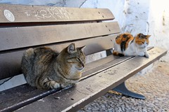 Cats on a bench in Nerja, Costa del Sol.