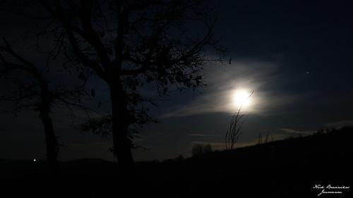sony sonyalpha sonya6000 sigma night moon nature tree