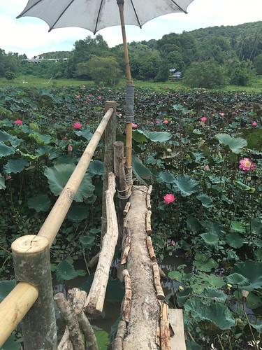 ネーチャーサムイ 菜園カフェ サムイ島 Nature samui