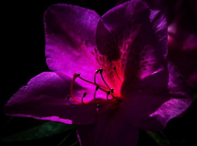 Flor fluorescente