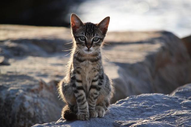 Kitten ❤