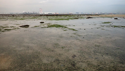 Possible dugong feeding trail in seagrass meadows, Cyrene Reef, Sep 2020