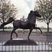 Kentucky Horse Park, 4089 Iron Works Pkwy, Lexington, KY