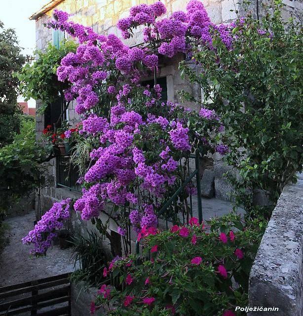 Small house garden