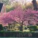 Spring in Springwells Park as seen from 15529 Longmeadow, Dearborn, MI