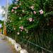 flower by the roadside