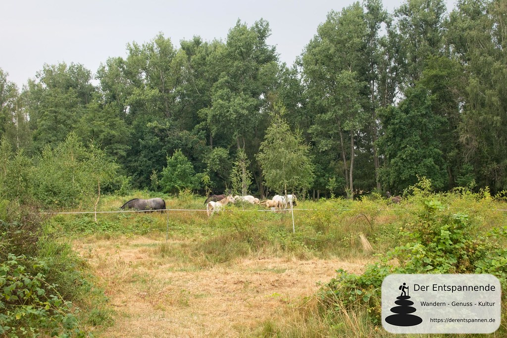 Pferdekoppel am Albrechtsbach