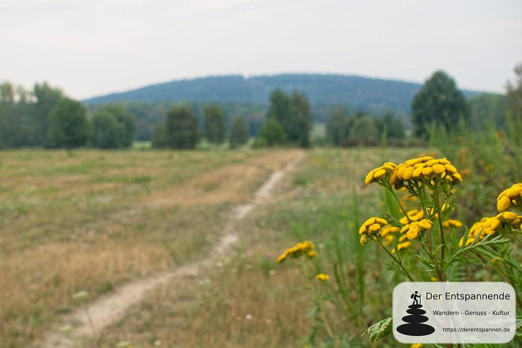 Über blühende Wiesen - auf der Via Sacra in Oberlausitz von Bautzen nach Cunewalde