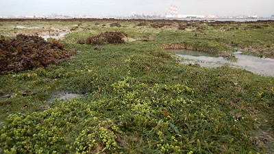 Seagrass meadows, Cyrene Reef, Sep 2020