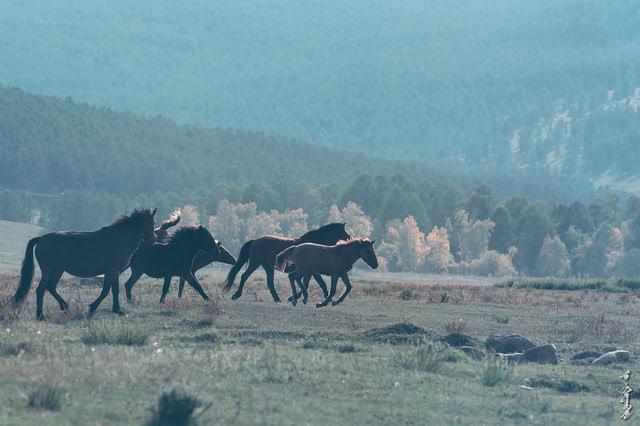 Autumn & Horses...