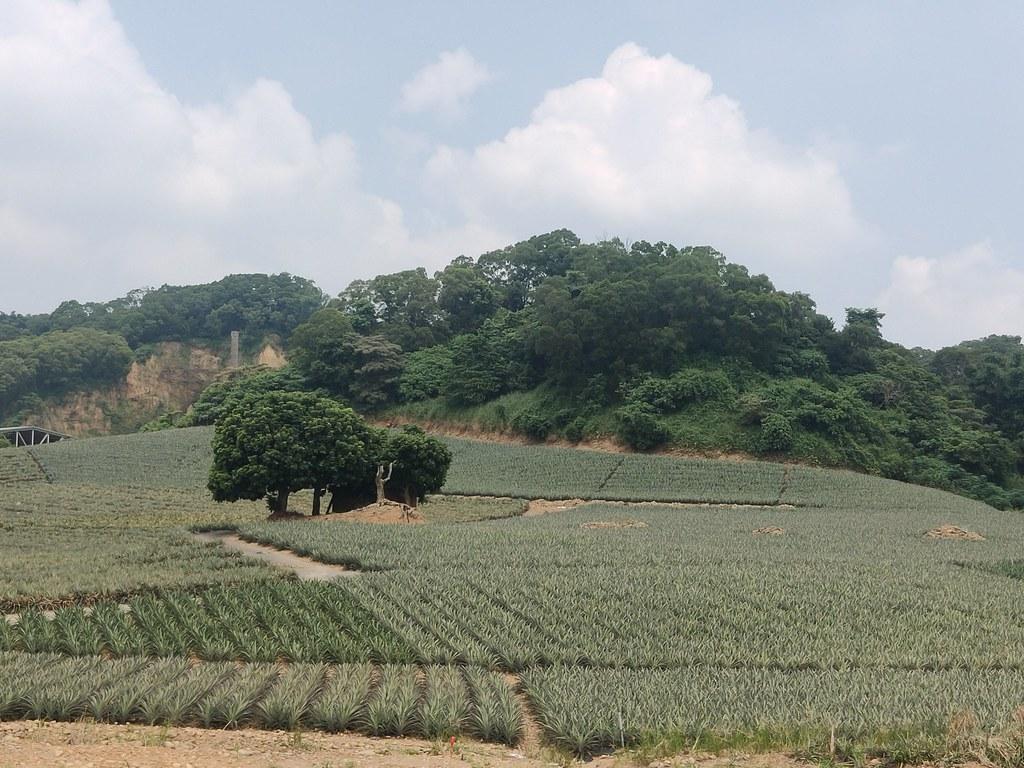 大樹木炭窯 (1)
