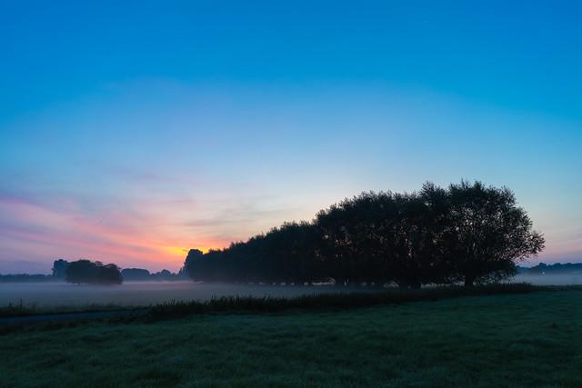 Willows at dawn