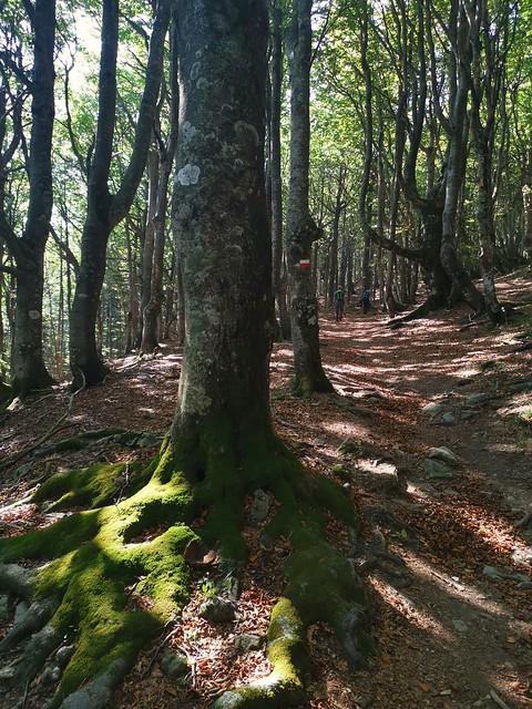Segreti del bosco