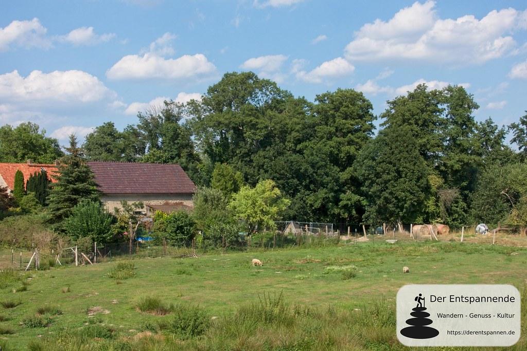 Landleben am Ortsrand von Kodersdorf